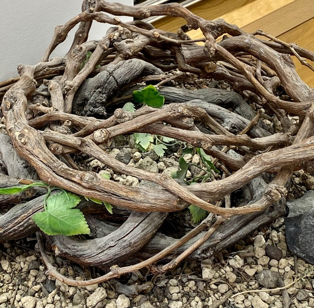 Grape basket from vines